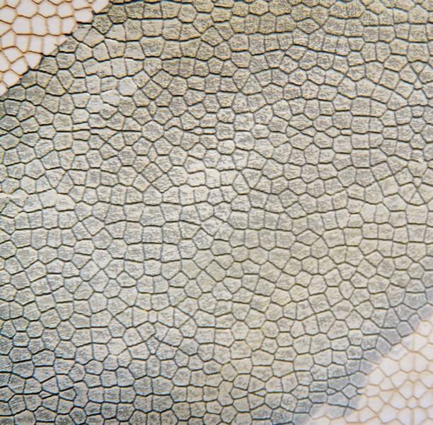 [Bois Modelisme] Opus Incertum, pierres et briques O / HO / N Murs_de_pierres_ho_murs_de_briques_ho_briques_ho_pierres_echelle_ho_briques_echelle_ho_3_BOIS_MODELISME_