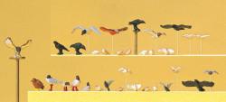 Pigeons, mouettes, corneilles et oiseaux de proie