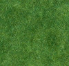 Herbage vert foncé